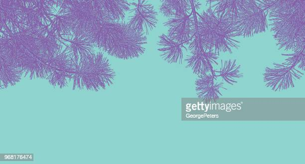 ponderosa pine branches background - ponderosa pine tree stock illustrations, clip art, cartoons, & icons