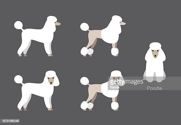 Poodle standing and watching, side view cartoon vector