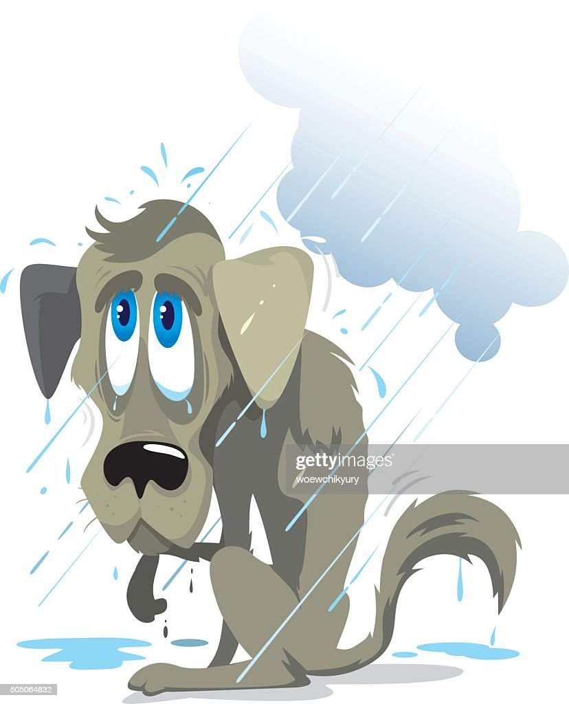 poor wet dog