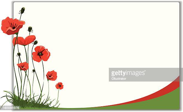 poppies frame design - poppy stock illustrations, clip art, cartoons, & icons