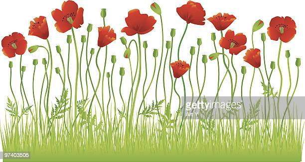 poppy field - poppy stock illustrations, clip art, cartoons, & icons