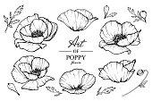 Poppy flowers drawing