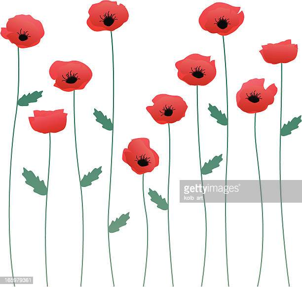 poppy stems - poppy stock illustrations