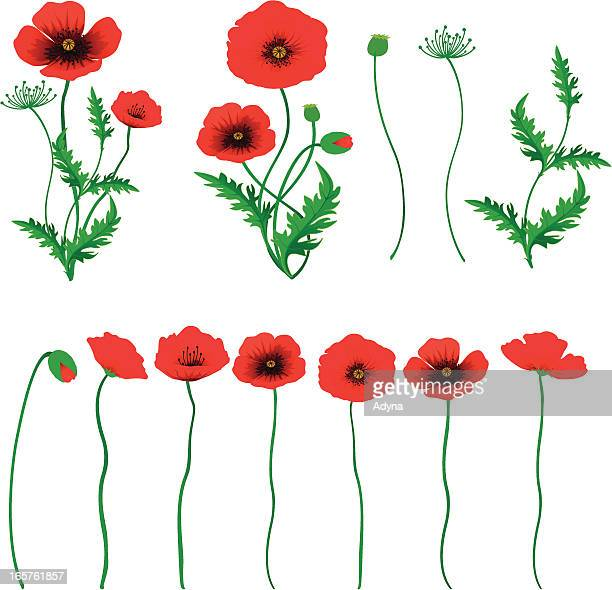 poppy - poppy stock illustrations