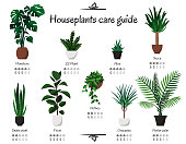 Popular, common houseplants care guide. Vector isolated collection of various indoor ornamental plants with watering and lighting norms