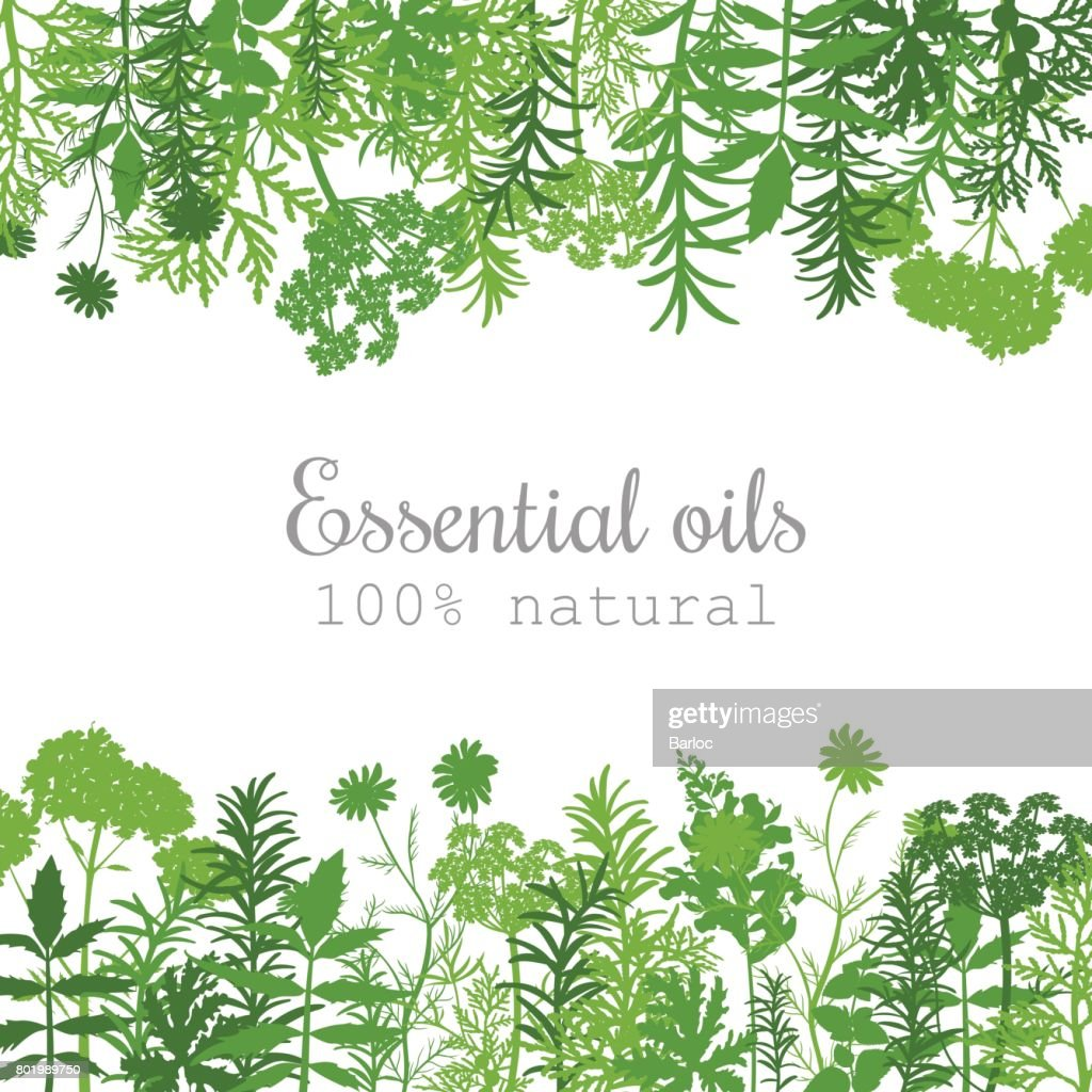 Popular essential oil plants label set in green. Flat