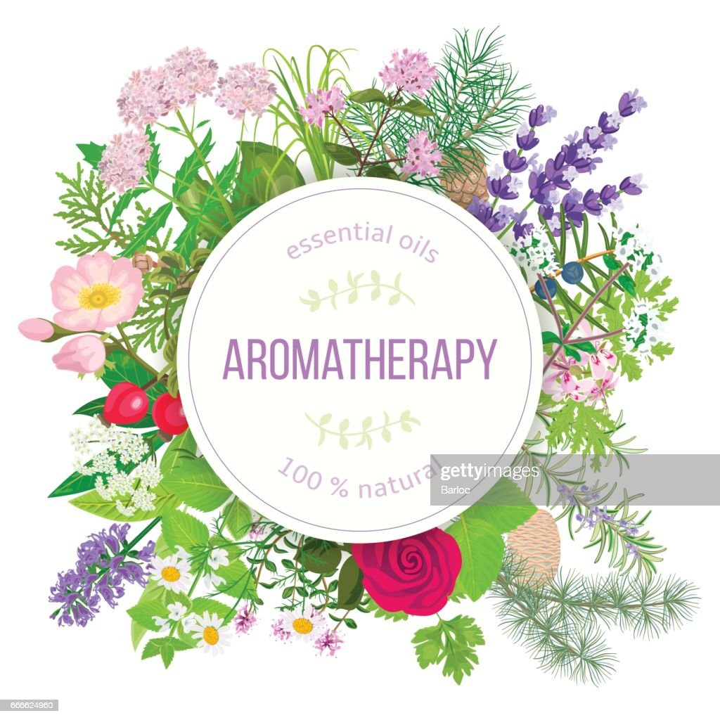 Popular essential oil plants label set. round badge with text aromatherapy