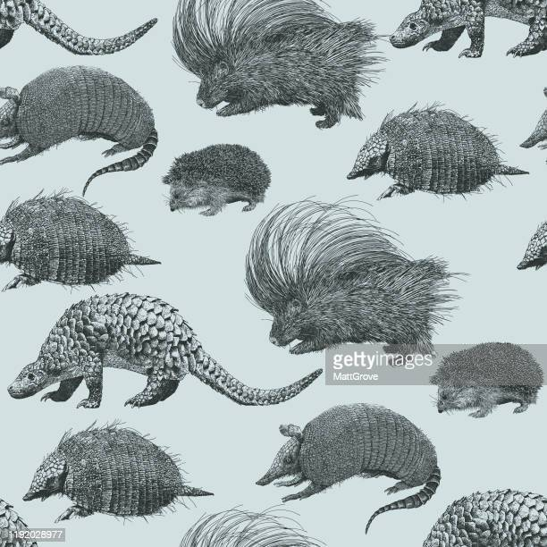 illustrations, cliparts, dessins animés et icônes de porcupine armadillo, hérisson, pangolin répétition transparente - pangolin