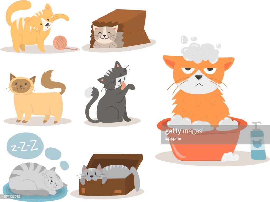 Portrait cat animal pet cute kitten purebred feline kitty domestic fur adorable mammal character vector illustration
