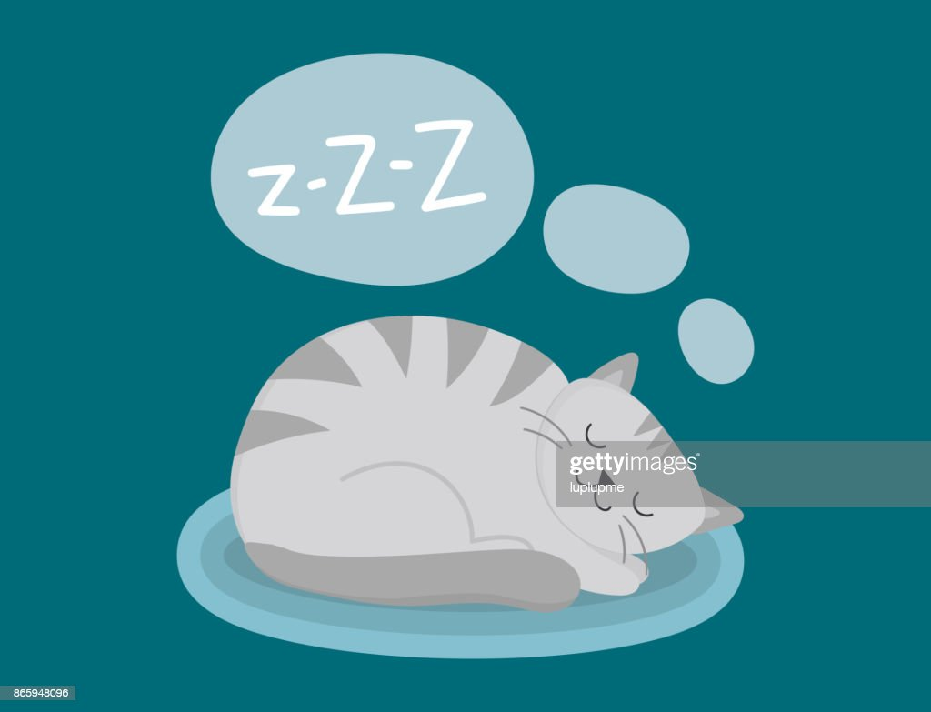 Portrait cat animal sleep pet cute kitten purebred feline kitty domestic fur adorable mammal character vector illustration