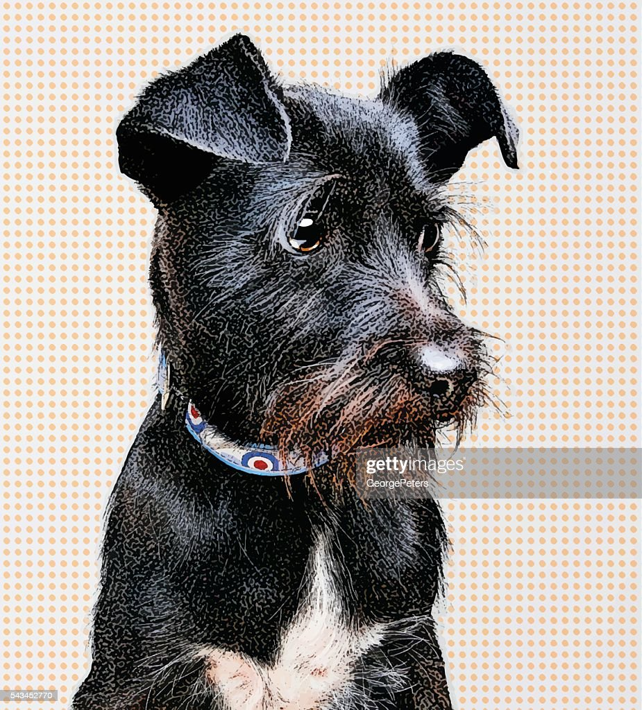 Portrait of a Black Terrier Mixed Breed Dog