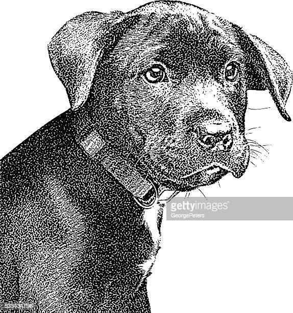 Portrait of a cute black puppy