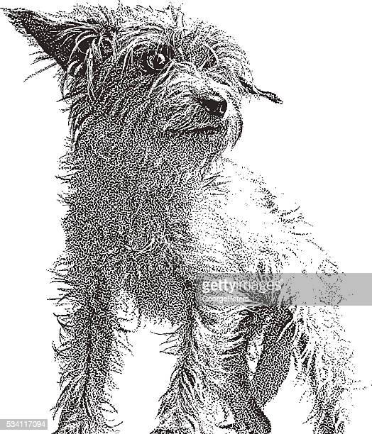 Portrait of a cute Terrier Mix Dog
