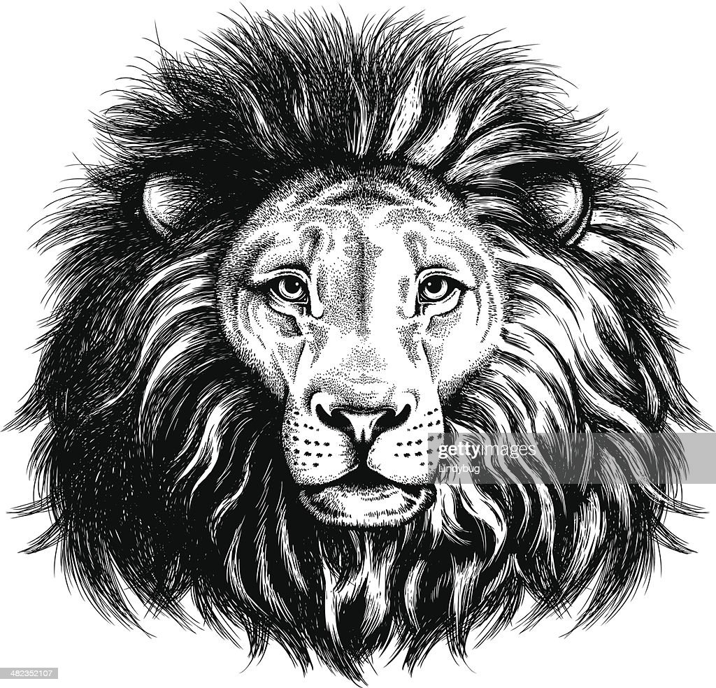 Portrait of a lion
