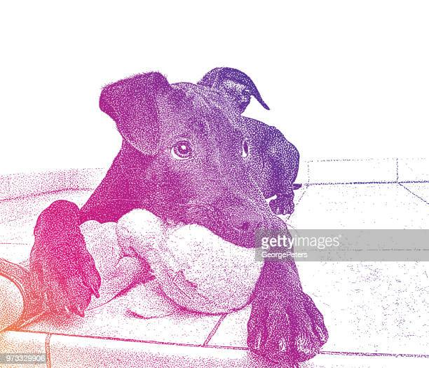 portrait of a playful young labrador retriever - dog toys stock illustrations