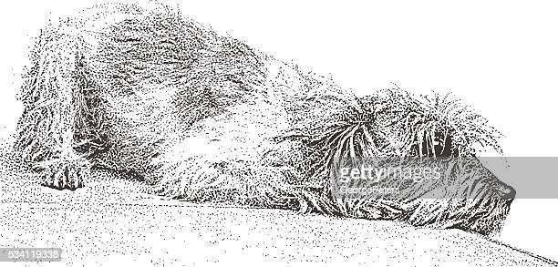 portrait of a sad terrier dog - lying on front stock illustrations, clip art, cartoons, & icons