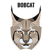 Portrait of bobcat vector illustration isolated on white. Cat specie