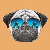 Portrait of Pug Dog with mirror sunglasses.