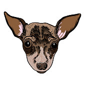 Portrait of Toy Terrier puppy. Hand drawn dog illustration. T- shirt and tattoo concept design. Vector.