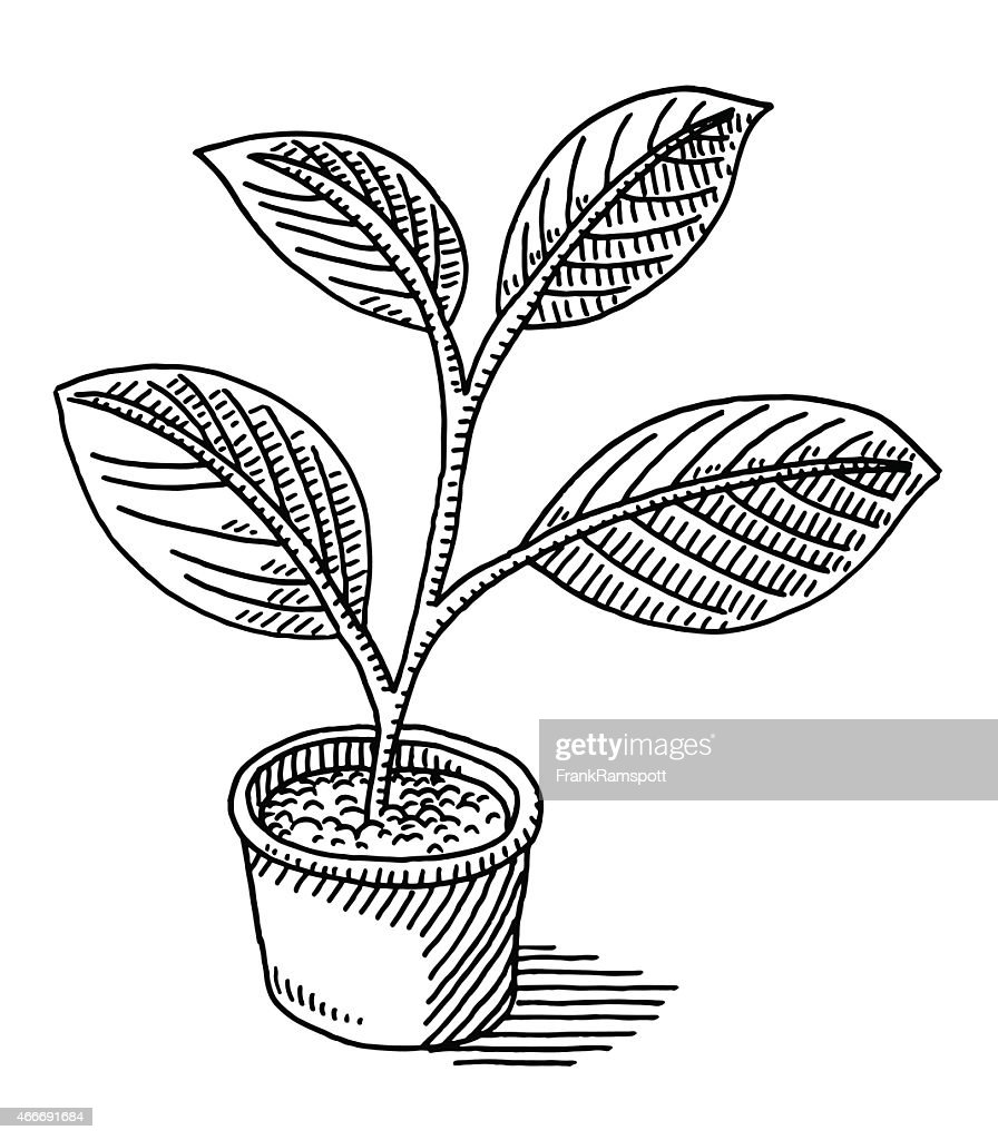 Flower Leaf Line Drawing : Pot plant leaves drawing vector art getty images