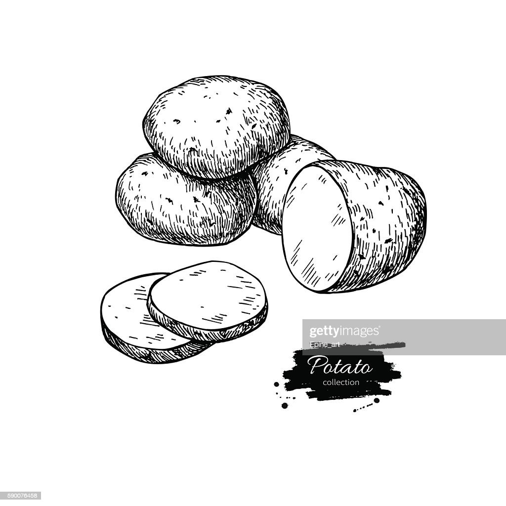 Potato vector drawing. Isolated potatoes heap and sliced piece.