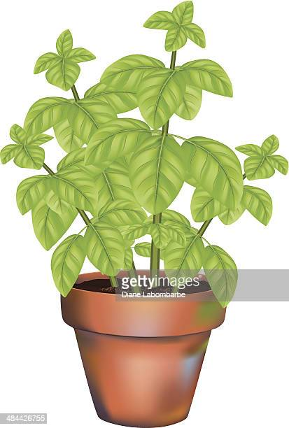 potted basil herb plant - basil stock illustrations, clip art, cartoons, & icons