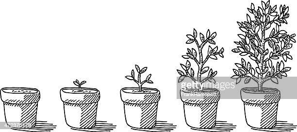 potted plant growing timelapse drawing - plant stock illustrations
