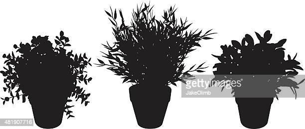 ilustrações de stock, clip art, desenhos animados e ícones de silhuetas de planta de vaso - planta de vaso