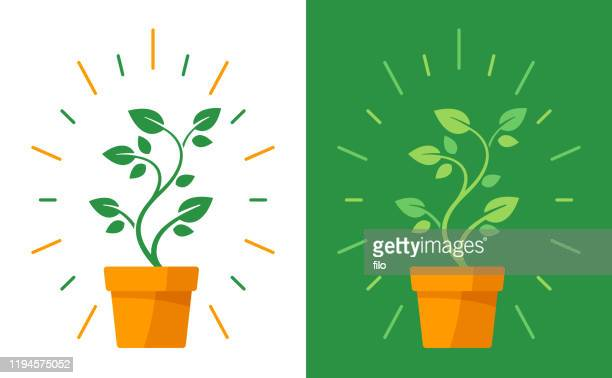 illustrazioni stock, clip art, cartoni animati e icone di tendenza di potted plant - flora