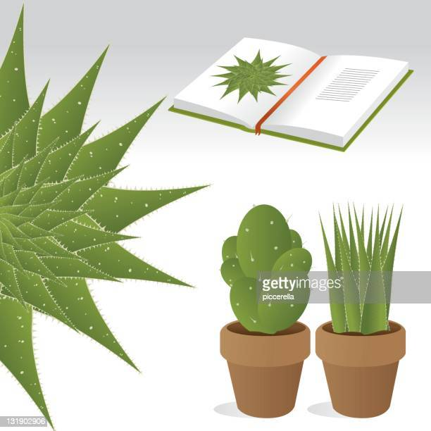 potted plants - encyclopaedia stock illustrations, clip art, cartoons, & icons