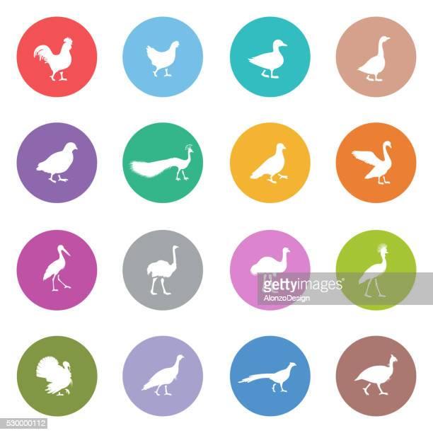 ilustrações, clipart, desenhos animados e ícones de ícones de aves - cockerel