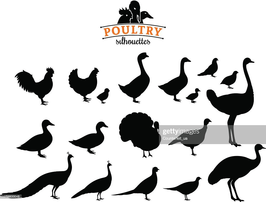 Poultry Silhouettes Isolated on White