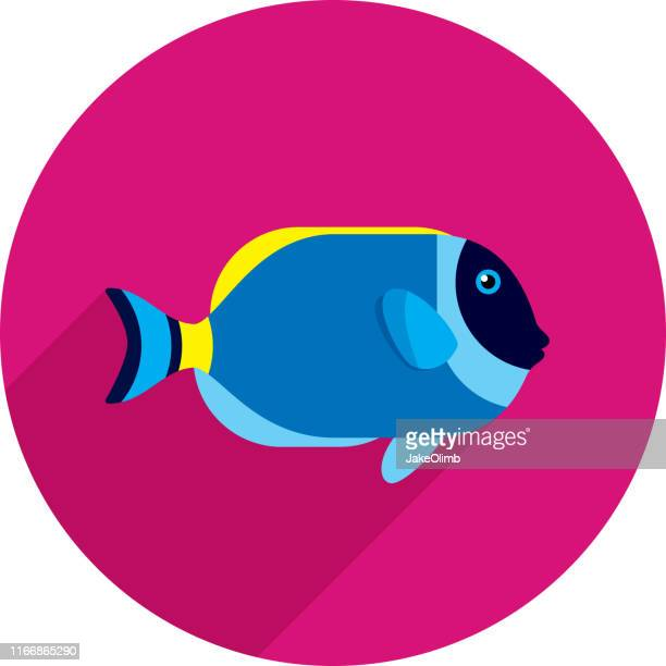 powder blue tang icon flat - acanthuridae stock illustrations, clip art, cartoons, & icons
