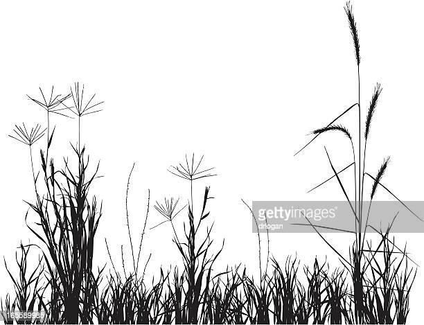 プレーリー grasses