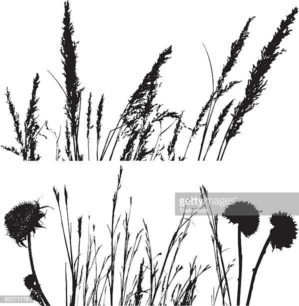 prairie plant and grass silhouettes - prairie stock illustrations, clip art, cartoons, & icons