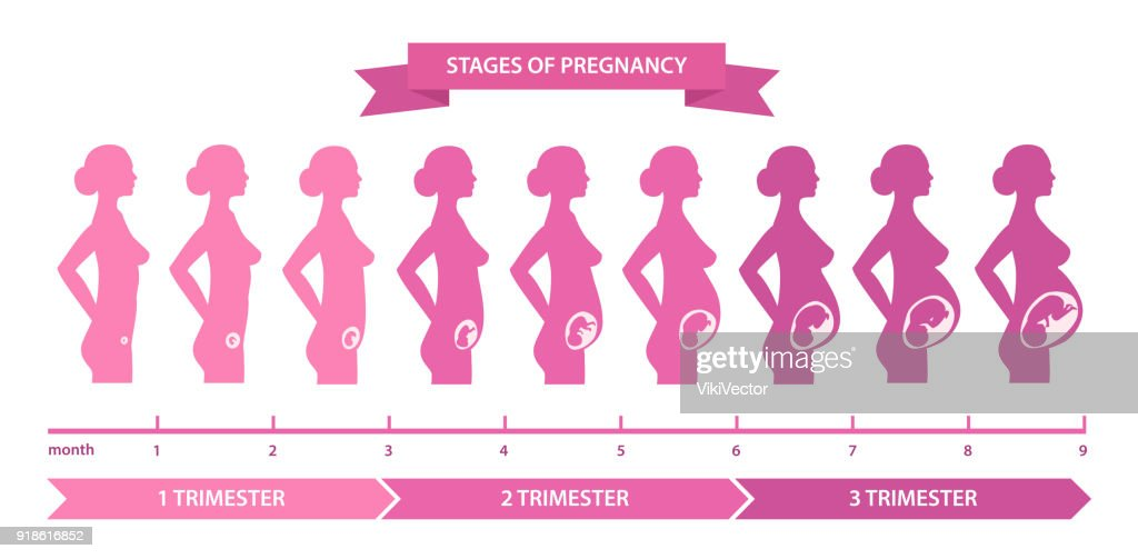 Pregnancy stages line