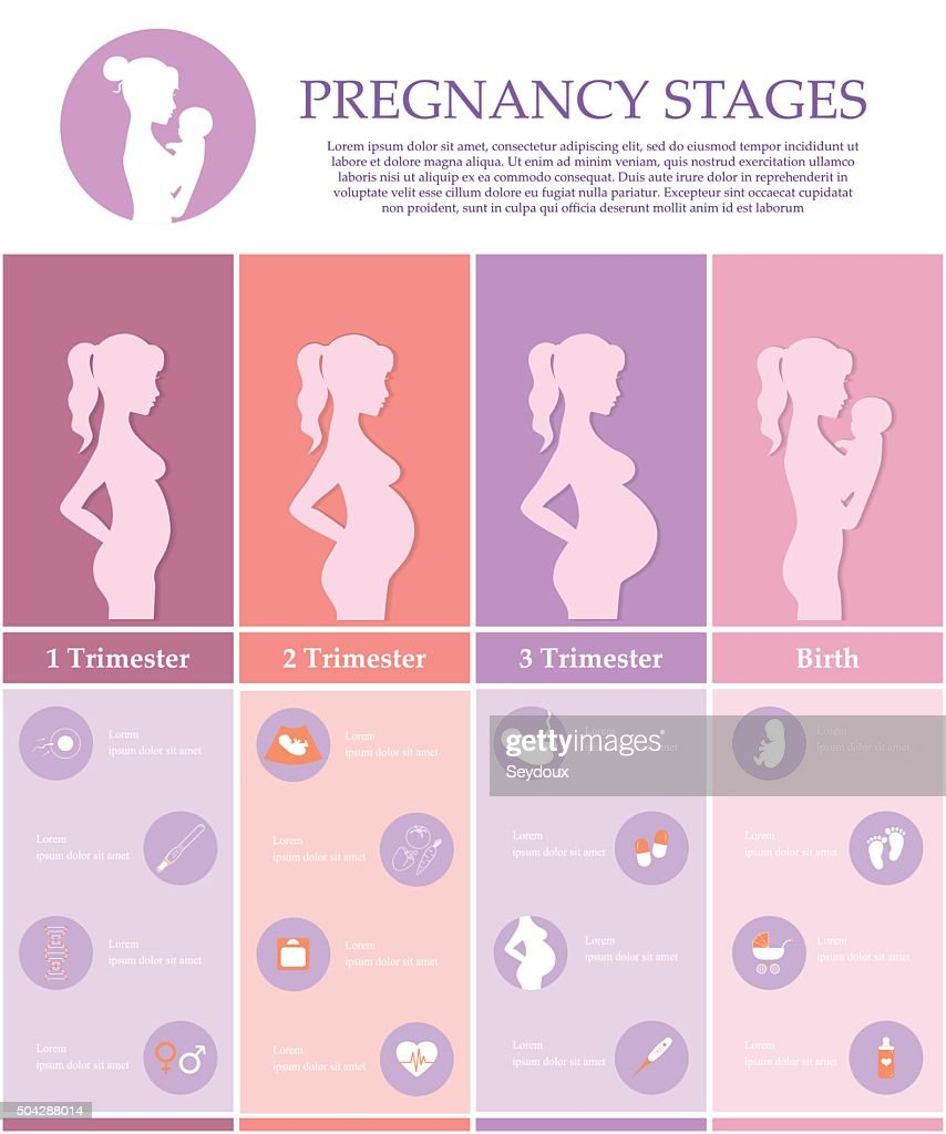 Pregnancy stages, trimesters and birth.