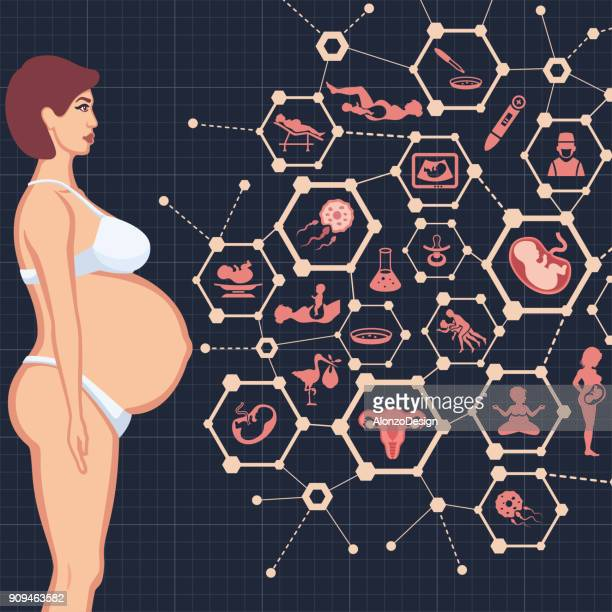 pregnancy - placenta stock illustrations, clip art, cartoons, & icons