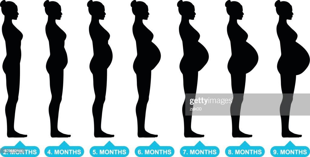 Pregnant female silhouettes : stock illustration