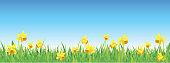 Pretty daffodils for spring