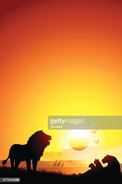 pride of african lions on the savannah - safari stock illustrations, clip art, cartoons, & icons