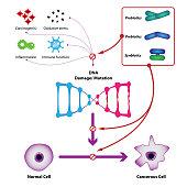 Probiotic bacteria prevent DNA damage and mutation