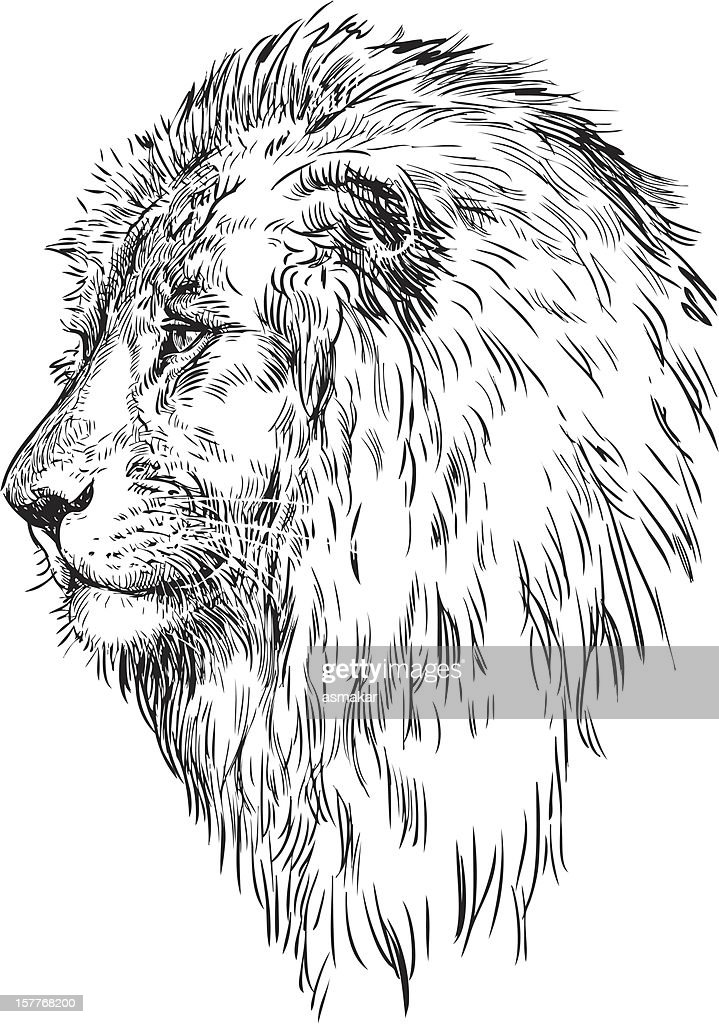 profile of a lion