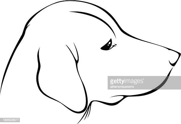 profile of labrador retriever - flaccid stock illustrations, clip art, cartoons, & icons