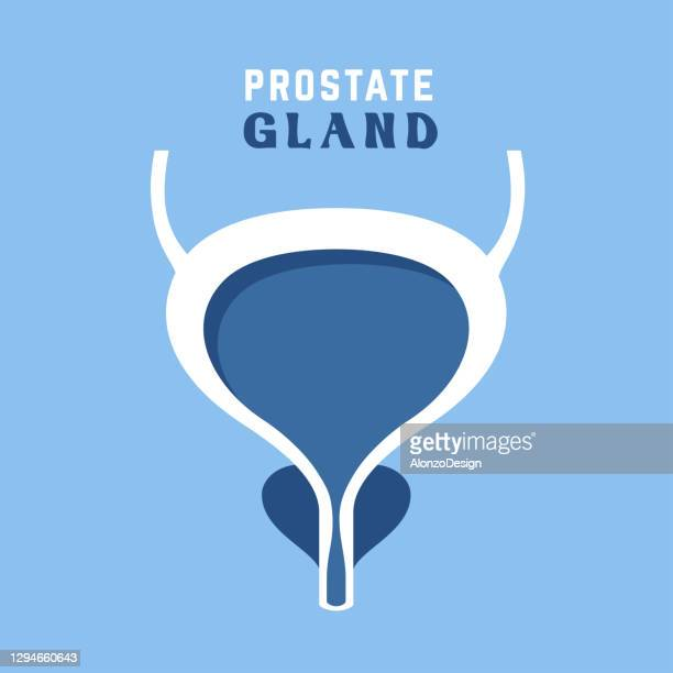 prostate and urinary bladder - prostate gland stock illustrations