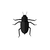 Protaetia May Bug Insect Design Flat