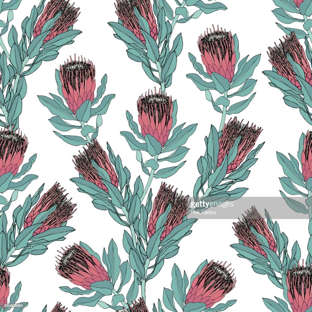 Protea Vector Pattern on White