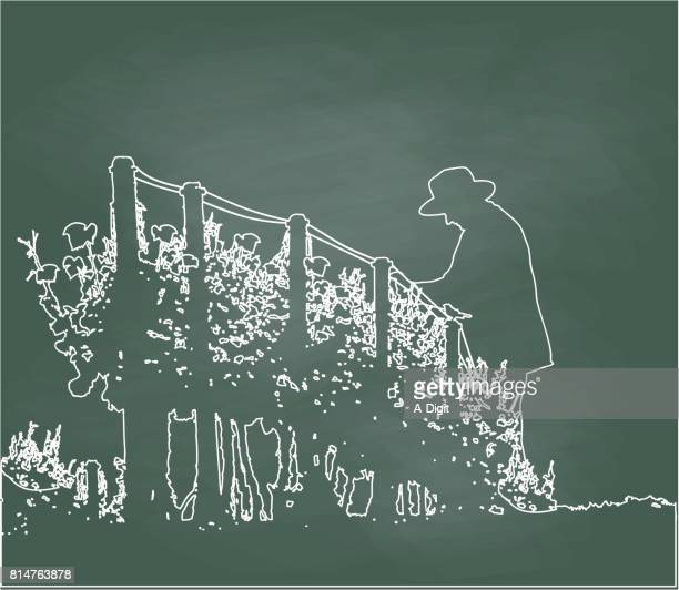 Beschneiden des Obstgartens