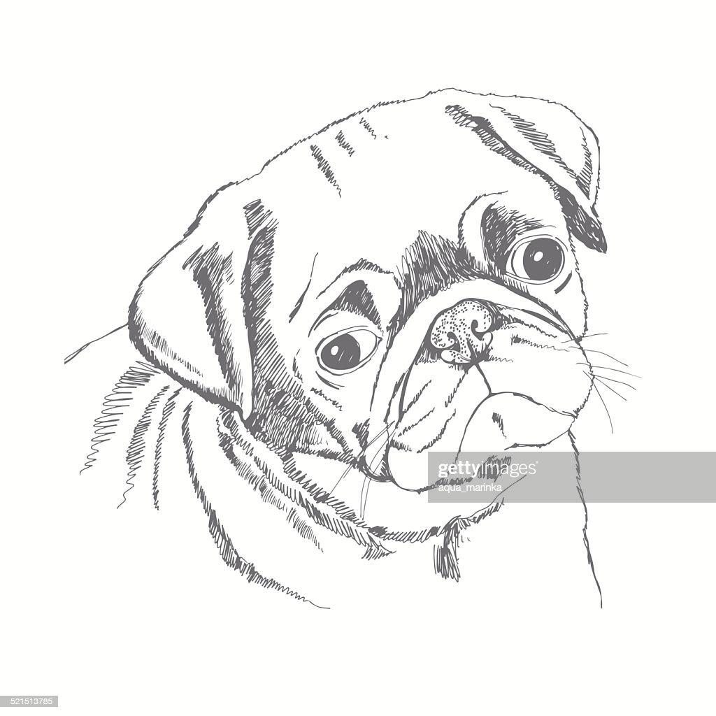 Pug dog face. Hand-drawn vector illustration. Sketch.