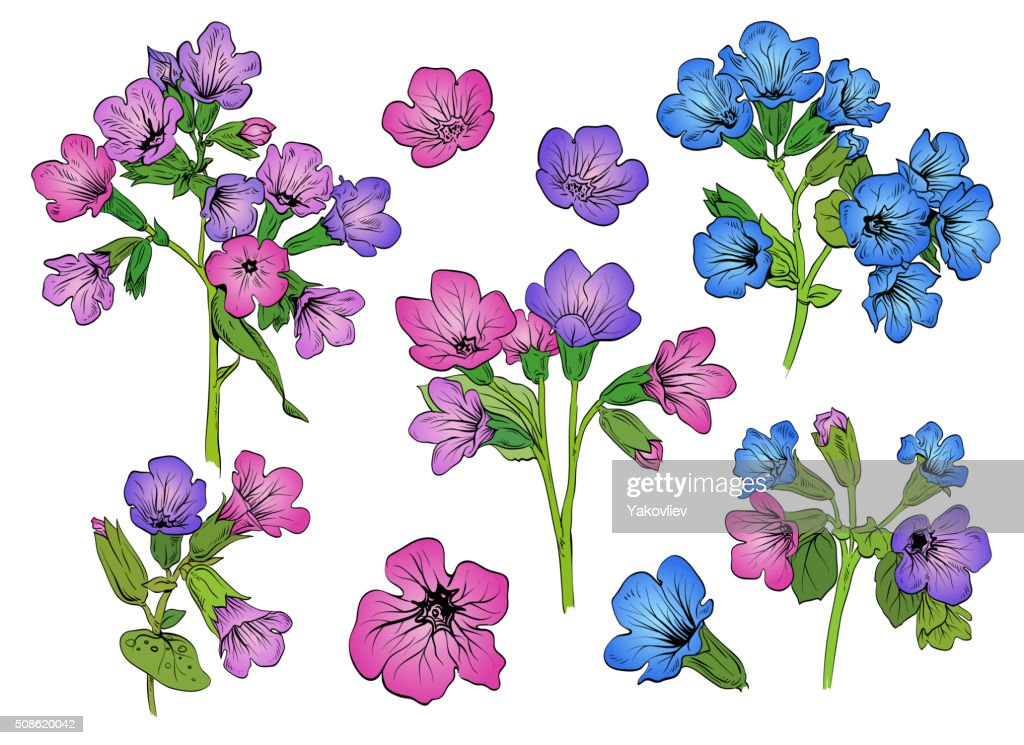 Pulmonaria flowers card backgrounds. Hand drawn vector illustration : Vector Art